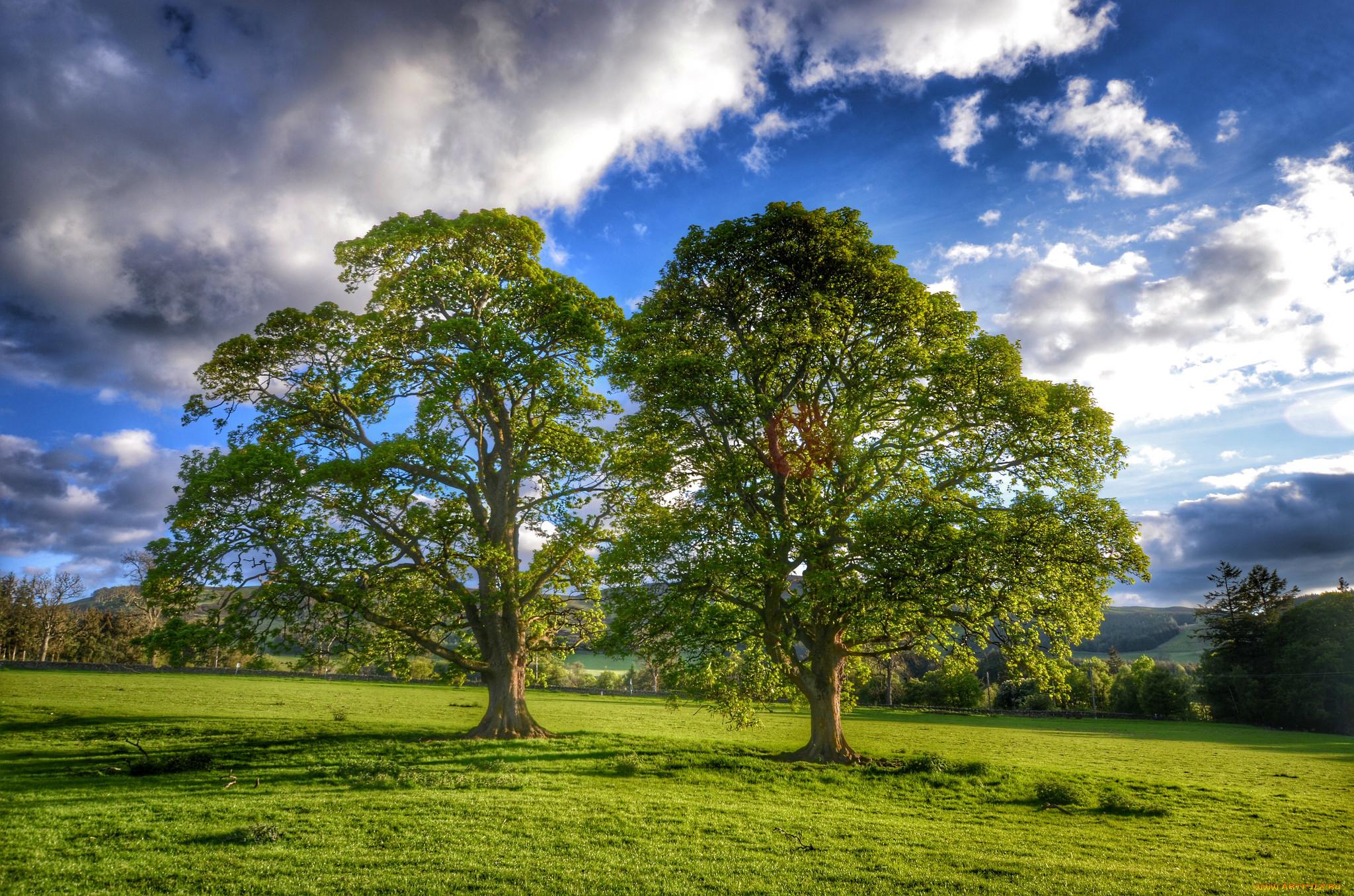 этом браке фотографии дерева дуба ребятишки после